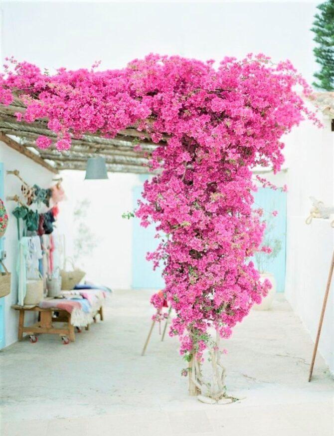 Primavera à vista: dicas para suas plantas